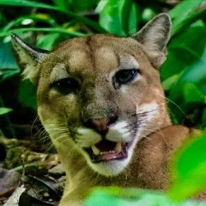 Osa Green Wildlife